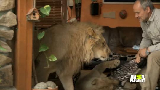 Preposterous Pets - Animal Planet